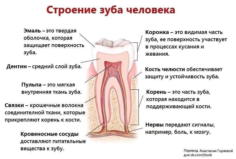 А вы знаете что такое зуб?